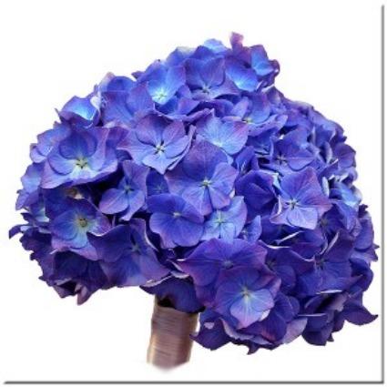 Ramo de novia de hortensias azules.